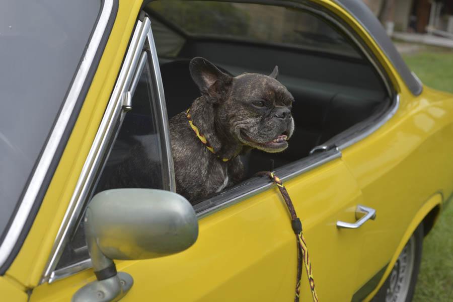 Foto Cachorro Viagem Car Bed Nápoli Ridelf