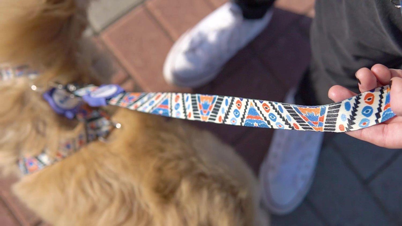 Coleira com Guia para Cachorros e Gatos Modelo Poly Africa