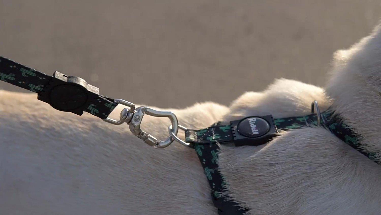 Coleira com Guia para Cachorros e Gatos Modelo Poly Cactos