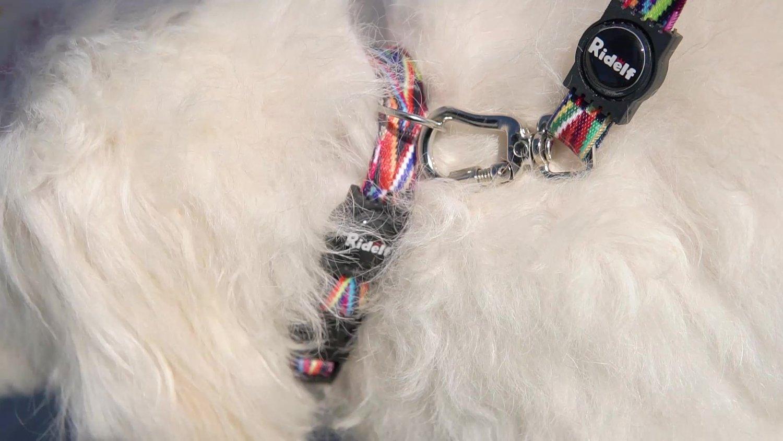 Coleira com Guia para Cachorros e Gatos Modelo Poly Color Lines