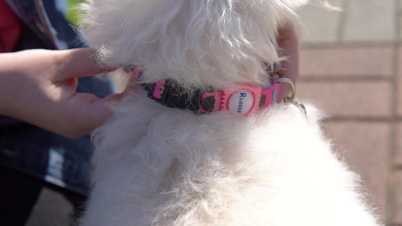Coleira com Guia para Cachorros e Gatos Modelo Poly Cupcake