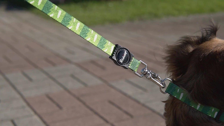 Coleira com Guia para Cachorros e Gatos Modelo Poly Grass