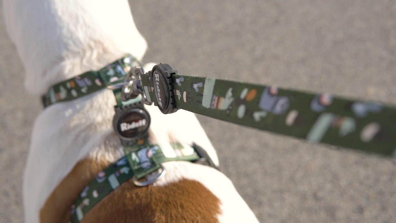 Coleira com Guia para Cachorros e Gatos Modelo Poly Lhama