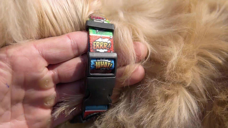 Coleira com Guia para Cachorros e Gatos Modelo Poly Quadrinhos