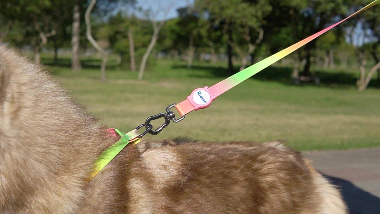 Coleira com Guia para Cachorros e Gatos Modelo Poly Tie Dye Neon