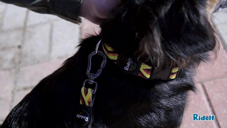 Coleira com Guia para Cachorros e Gatos Modelo Power Tropical