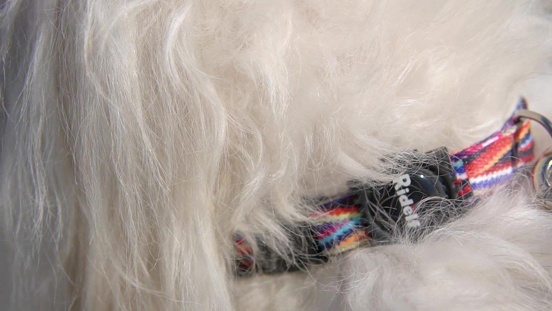 Coleira para Cachorro e Gato Modelo Poly Color Lines