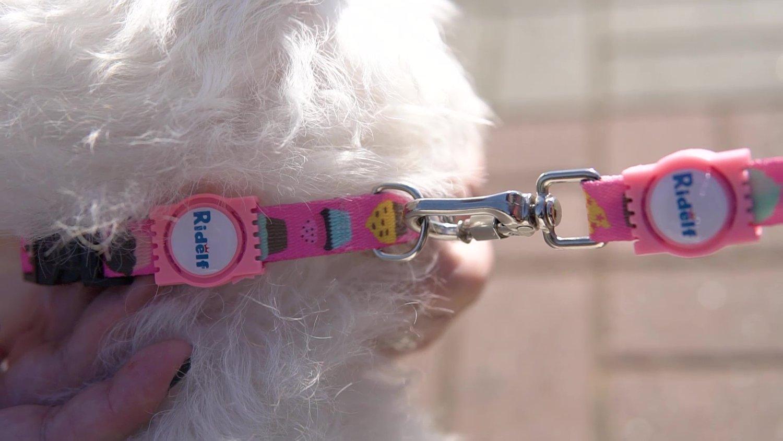 Coleira para Cachorro e Gato Modelo Poly Cupcake