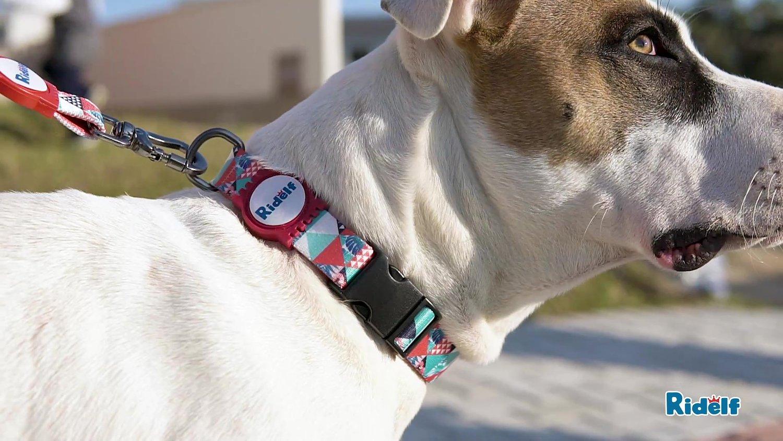 Coleira para Cachorros e Gatos Modelo Power Mosaico