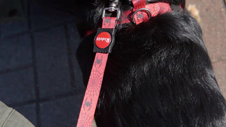 Guia para Cachorros e Gatos Modelo Poly Dog Aranha