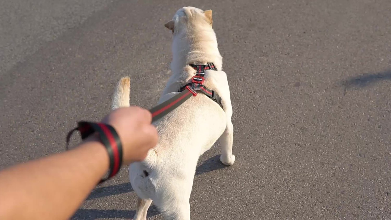 Guia para Cachorros e Gatos Modelo Poly Italy
