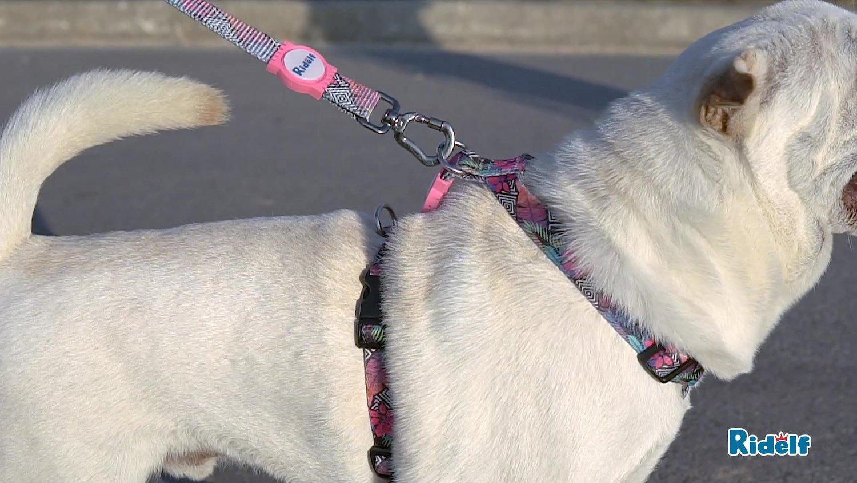 Guia Redutora de Impacto para Cachorros e Gatos Modelo Power Flores