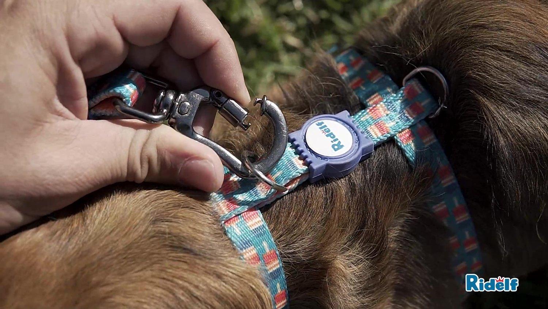 Guia Redutora de Impacto para Cachorros e Gatos Modelo Power Picolé