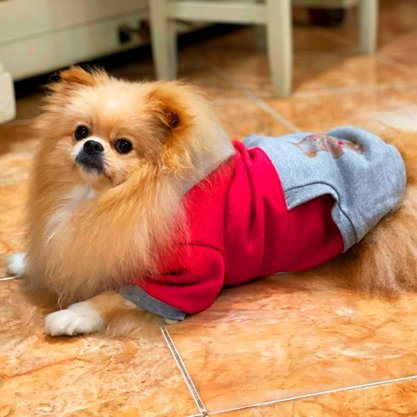 Moletom Pet Ridelf Modelo Teddy com Capuz
