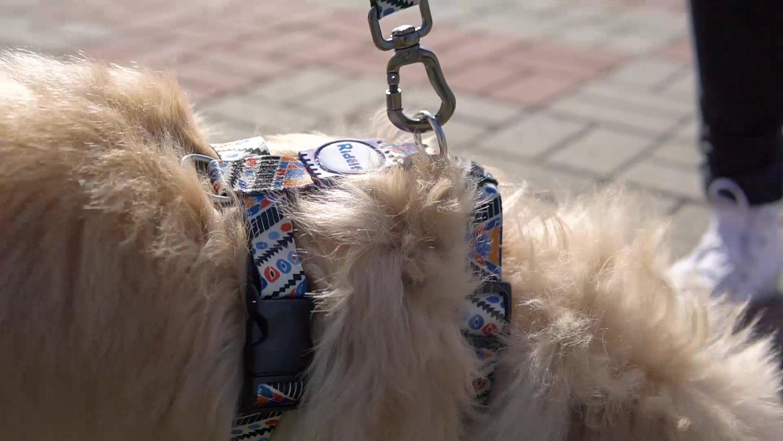 Peiteira com Guia para Cachorros e Gatos Modelo Poly Africa