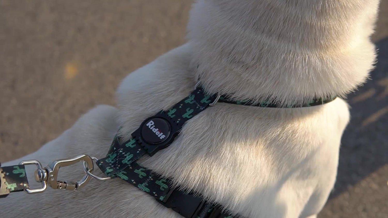 Peiteira com Guia para Cachorros e Gatos Modelo Poly Cactos