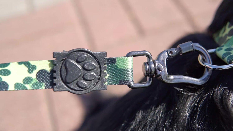 Peiteira com Guia para Cachorros e Gatos Modelo Poly Camuflado