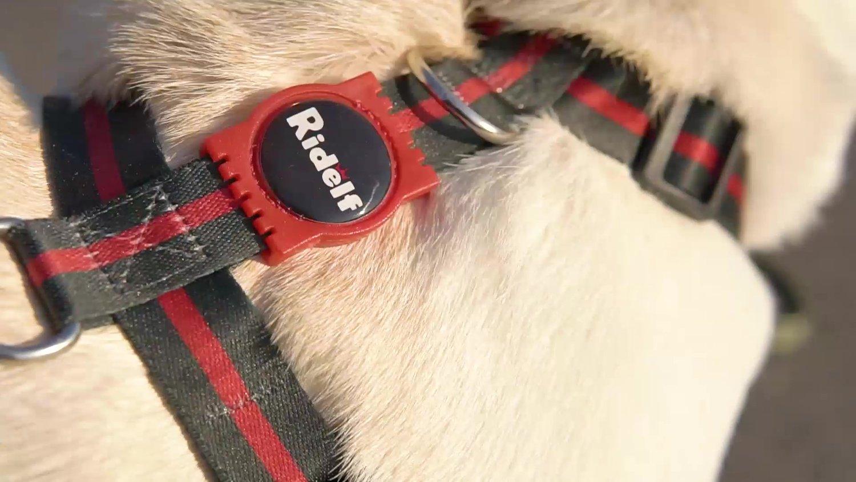Peiteira com Guia para Cachorros e Gatos Modelo Poly Italy