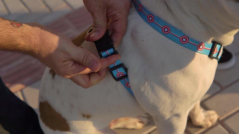 Peiteira com Guia para Cachorros e Gatos Modelo Poly Patriota