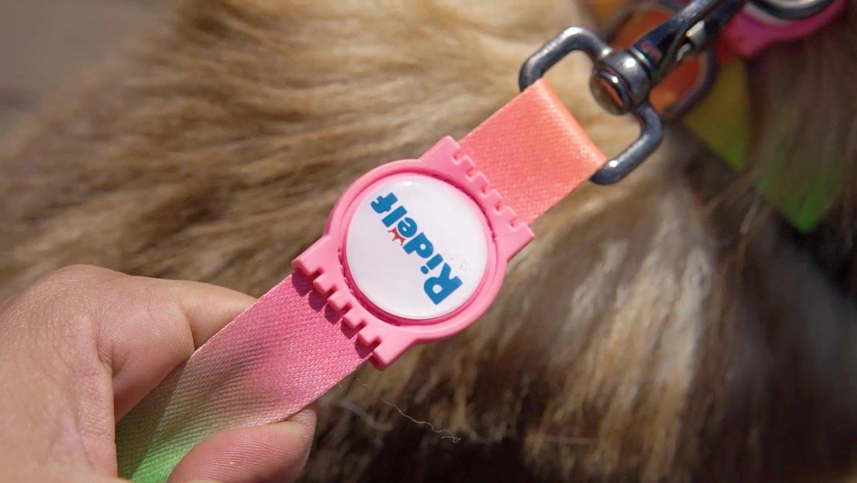Peiteira com Guia para Cachorros e Gatos Modelo Poly Tie Dye Neon