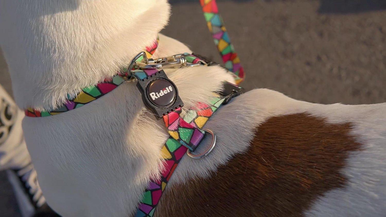 Peiteira com Guia para Cachorros e Gatos Modelo Poly Vitral