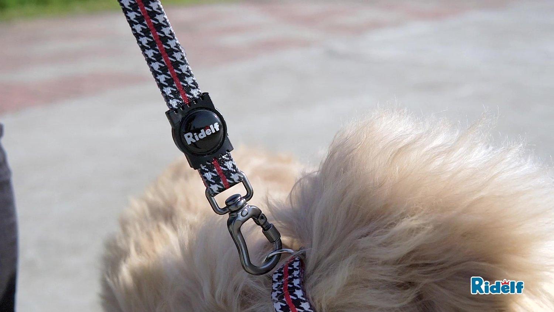 Peiteira com Guia para Cachorros e Gatos Modelo Power Versailles