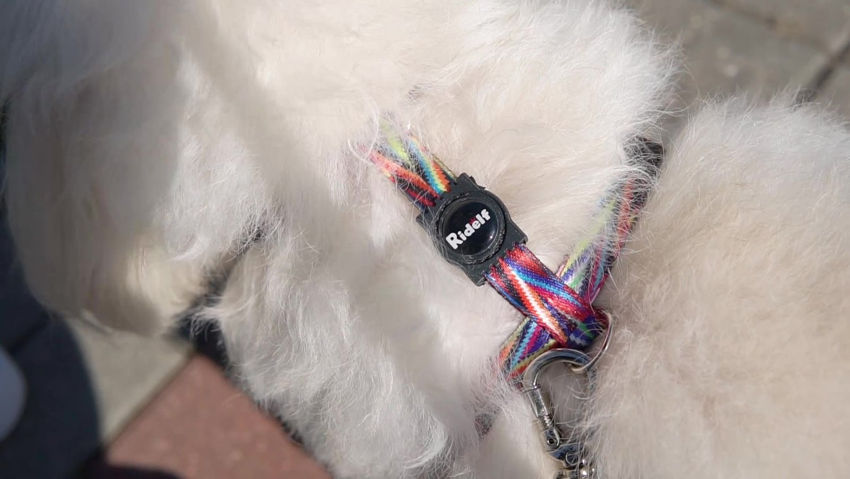 Peiteira para Cachorros e Gatos Modelo Poly Color lines