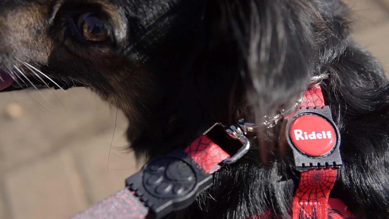Peiteira para Cachorros e Gatos Modelo Poly Dog Aranha