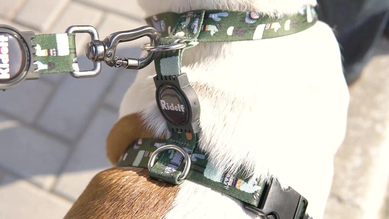 Peiteira para Cachorros e Gatos Modelo Poly Lhama