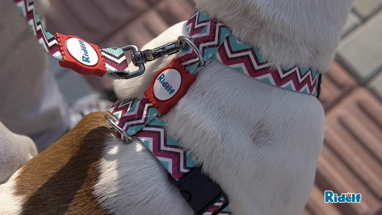 Peiteira para Cachorros e Gatos Modelo Power Chevron