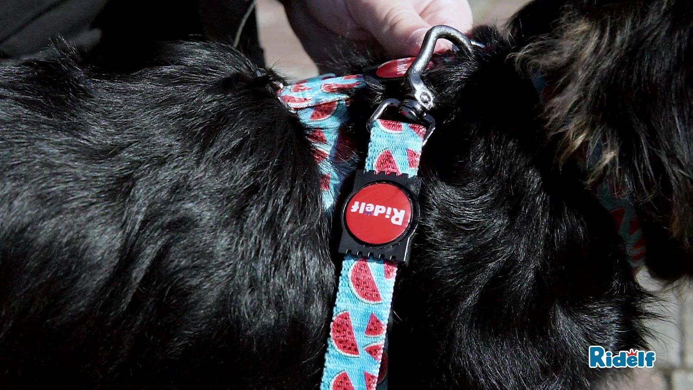 Peiteira para Cachorros e Gatos Modelo Power Melancia