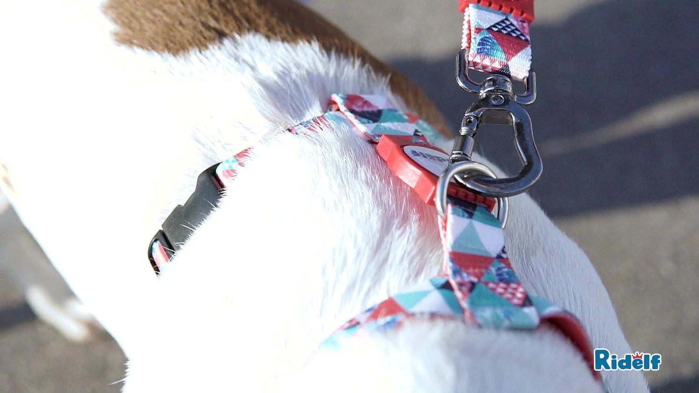 Peiteira para Cachorros e Gatos Modelo Power Mosaico