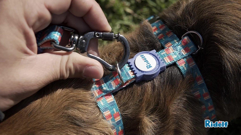 Peiteira para Cachorros e Gatos Modelo Power Picolé