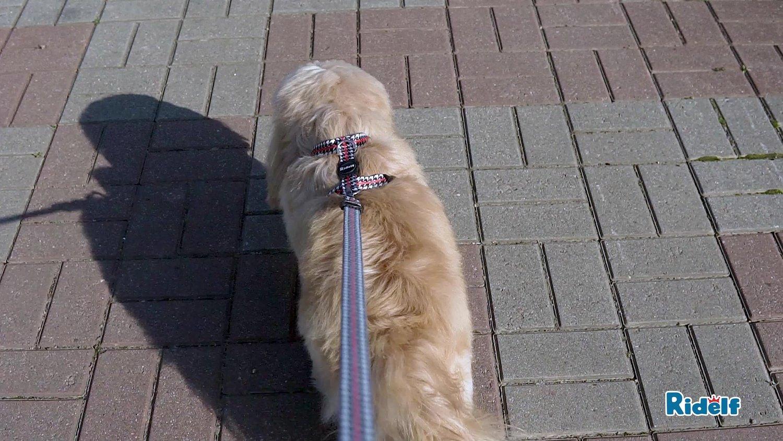 Peiteira para Cachorros e Gatos Modelo Power Versailles