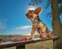 Coleira com Guia para Cachorros e Gatos Modelo Power Melancia
